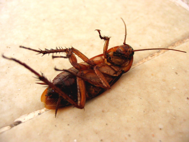 мертвый таракан на полу
