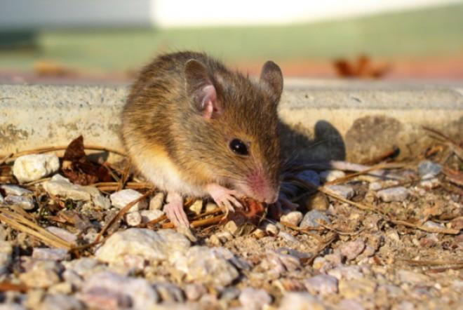 мышь внешний вид