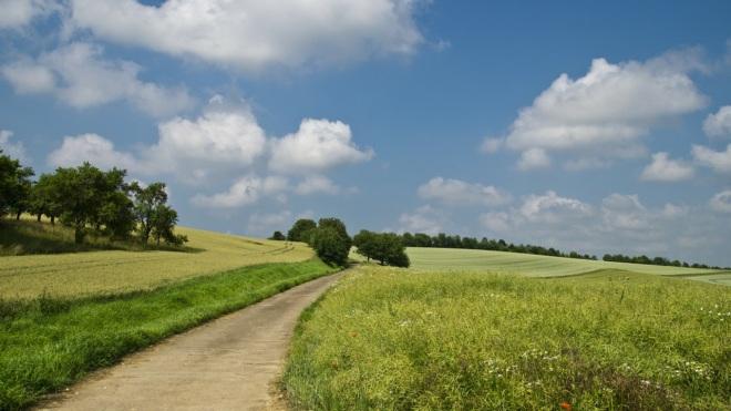 поле летом